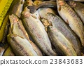 fresh fish in different sizes laying on a table 23843683