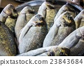 fresh fish in different sizes laying on a table 23843684