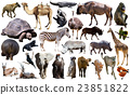 Birds, mammal and other animals of Africa isolated 23851822