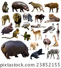 Set of hippo and other African animals. Isolated 23852155