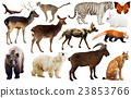 animal, background, collection 23853766