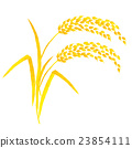 ear of rice, paddy, rice plant 23854111