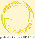 ear of rice, paddy, rice plant 23854217