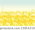 ear of rice, paddy, rice plant 23854219