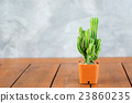 Cactus collection in small flower pots. 23860235