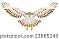 hawk, falcon, bird 23865240