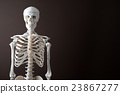 骨架 模特兒 人物 23867277