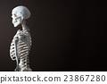 骨架 模特兒 人物 23867280