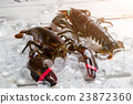 Fresh lobsters on ice cubes. 23872360