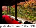 kongourin-ji, yellow leafe, maple 23876994