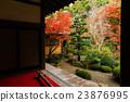 kongourin-ji, yellow leafe, maple 23876995