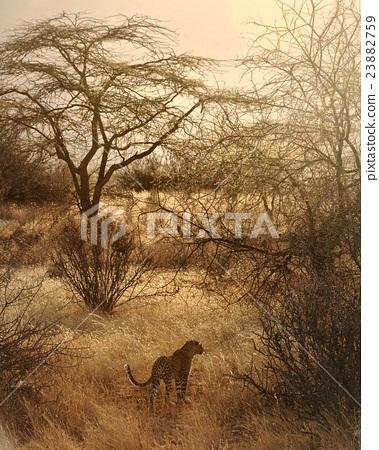 肯亞 非洲 23882759