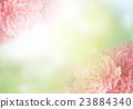 carnation 23884340