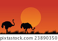 Silhouette of Ostrich scenery at afternoon 23890350
