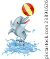 dolphin playing ball 23891626
