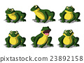 Green Frog Isolated on White Background 23892158