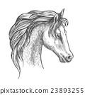 Arabian horse head sketch for equestrian design 23893255