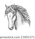 Purebred horse head sketch for equine sport design 23893371