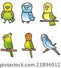 鳳頭鸚鵡 鸚鵡 長尾鸚鵡 23894012