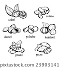 Set of hand drawn nuts 23903141
