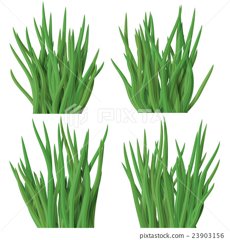 Set of grass tussock isolated on white background 23903156