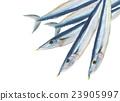 生秋刀魚 23905997