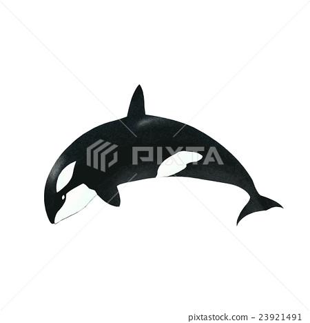 矢量 逆戟鲸 鲨鱼 23921491