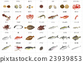 Marine Product, seafood, fish and shellfish 23939853
