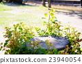 蘖 여름 정원 23940054