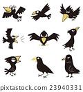 烏鴉 鳥兒 鳥 23940331