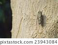 매미, 곤충, 벌레 23943084