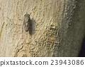 매미, 곤충, 벌레 23943086