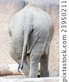 africa, close-up, elephant 23950211