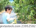 藍莓 捏 採摘 23952582