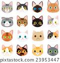 貓 貓咪 小貓 23953447