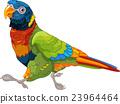Running Lory Parrot 23964464