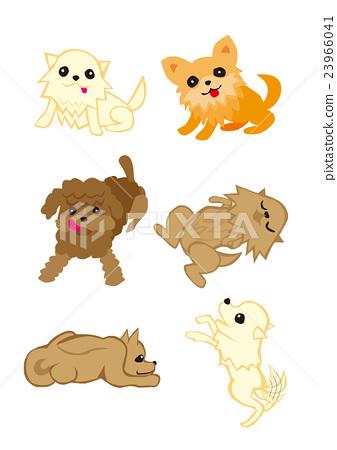 室內狗,寵物,狗,寵物狗,各種狗品種 23966041