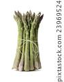 asparagus 23969524