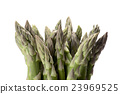 asparagus 23969525