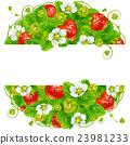Vector strawberry round frame 23981233