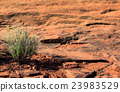 Red Rock Plants 23983529