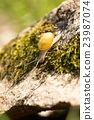 Nice small snail on stone with moss 23987074