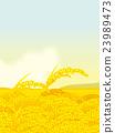 ear of rice, vector, grain 23989473