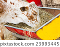 Close up of cow eating hay 23993445