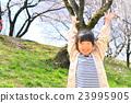 一個10歲的女孩,櫻花盛開 23995905