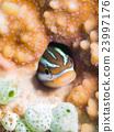 水下照片 鱼 热带鱼 23997176
