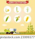벡터, 곡물, 수확 23999377