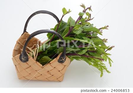 Tsurumurasaki that entered the basket 24006853