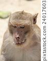动物 哺乳动物 猴子 24017603