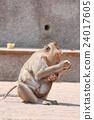 动物 拥抱 猴子 24017605